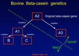 a1-en-a2-beta-caseine-melk