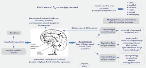 exorfinen-systeem-2